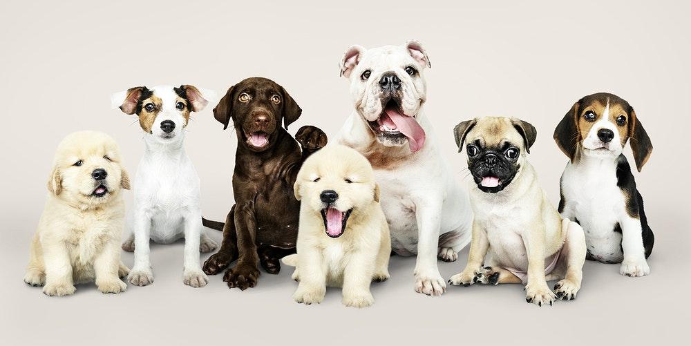 מספרת כלבים בוטיק לכל סוגי הכלבים