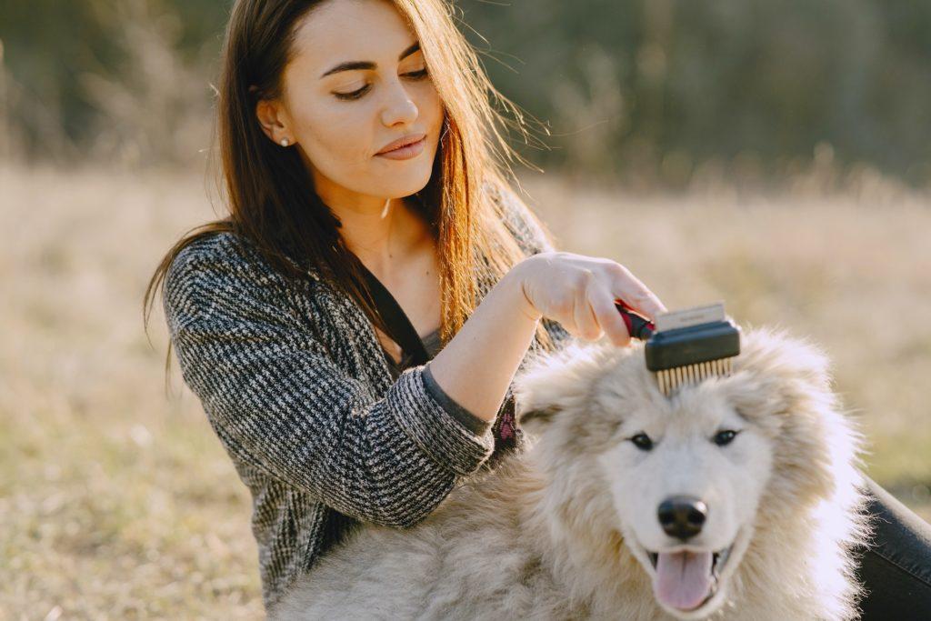 טיפוח כלב - כל כך חשוב